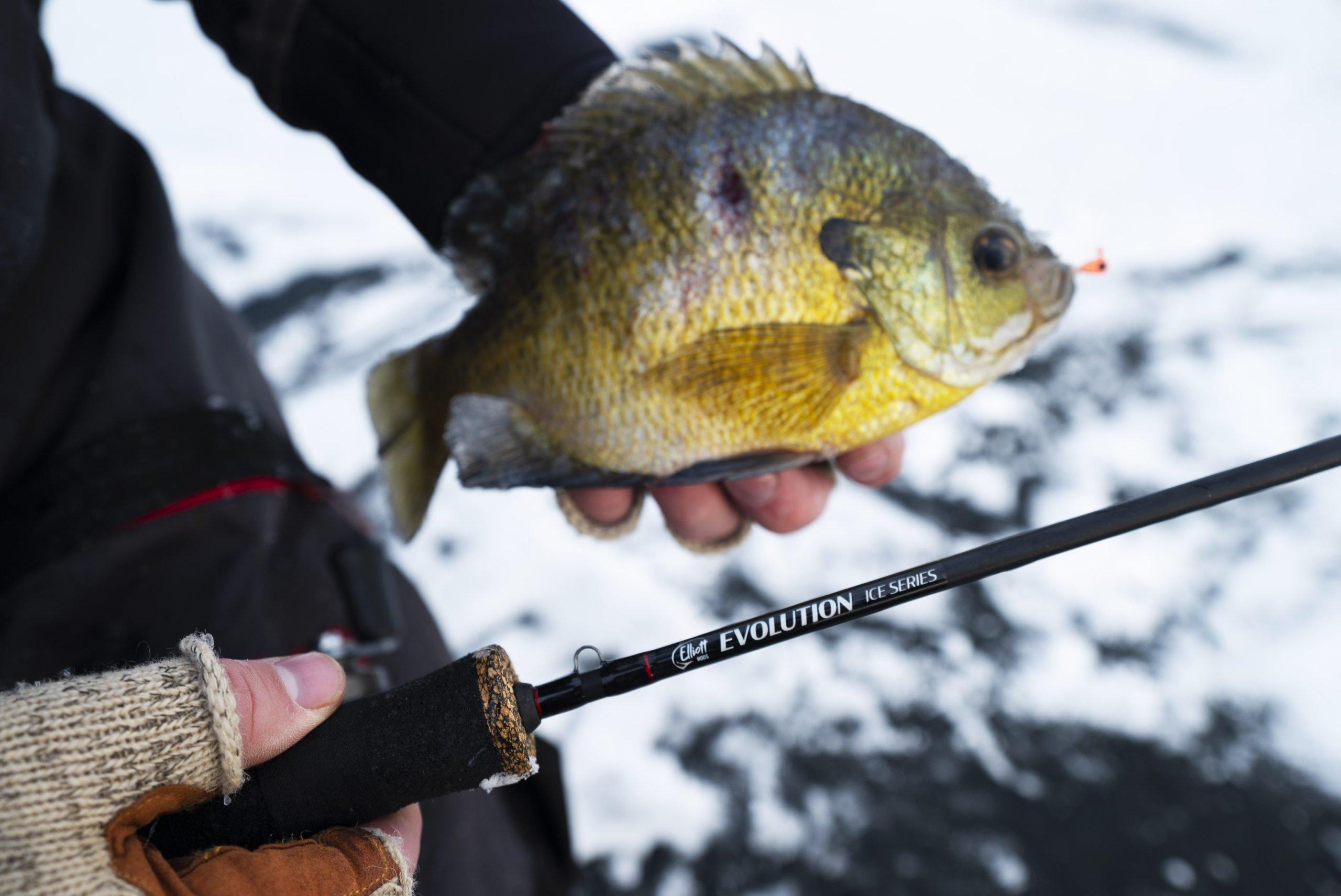 elliott evolution ice series fishing rod and bluegill